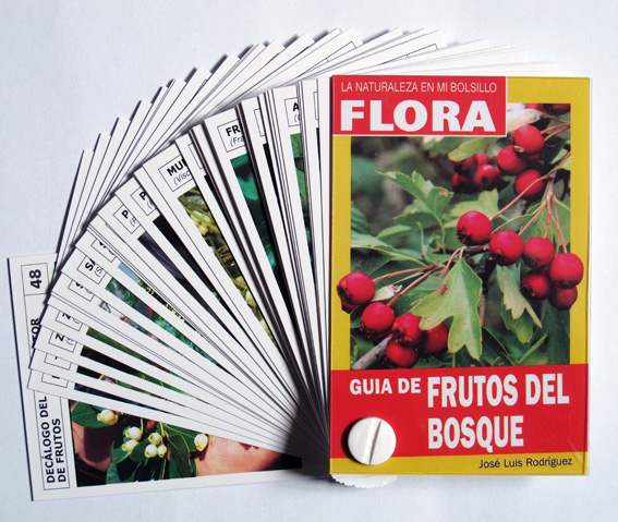 12-FICHERO FRUTOS DEL BOSQUE